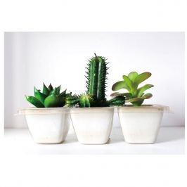 Vászonkép Kaktuszok Arizona, 60 x 40 cm