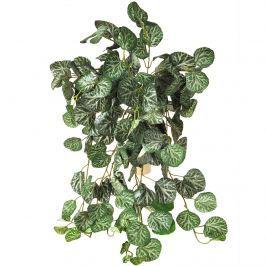 Begónia művirág, 80 cm