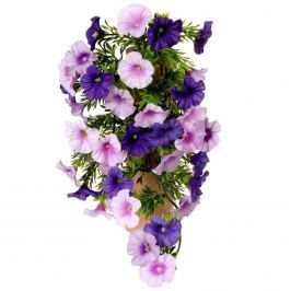Művirág Petúnia lila, 40 cm