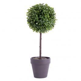 Bukszus fa cserépben fekete, 22 cm